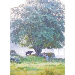 5079 – Tjur under träd (Ferdinand)
