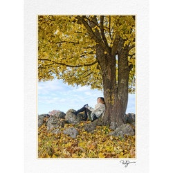 Höst vid trädet