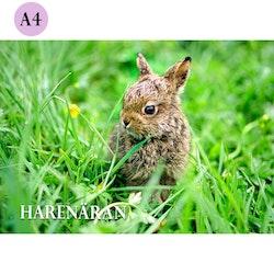 A4 Kort – Harenäran