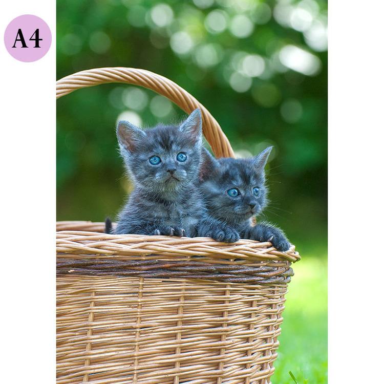 A4 Kort - Kattungar