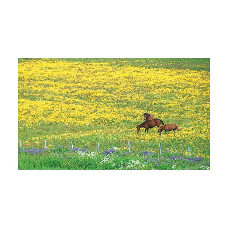 7076 – Hästar på bete