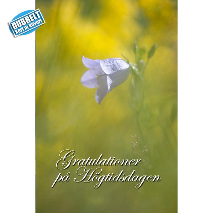 Dubbelt Vykort med kuvert  Gratulationskort - Blåklocka. Foto: Per Johansson - Joanzon. Kortbutiken säljer detta vykort.