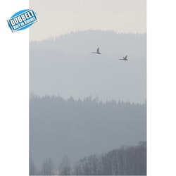D-06 – Svanar i dimma
