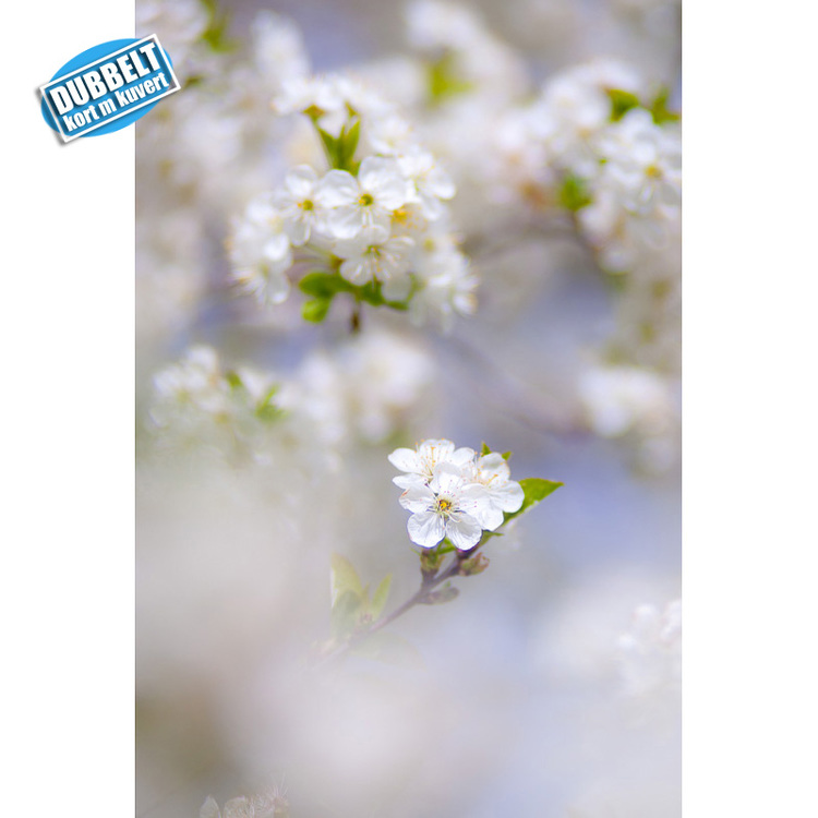 D-10 – Blommande fruktträd