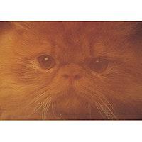 E-4017 – Katt ansikte
