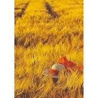 Solhatt i sädesfält