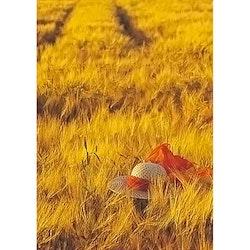 4018 – Solhatt i sädesfält