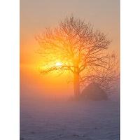 Julkort – Sol i trädkrona