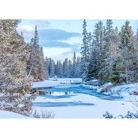 J-1217 Julkort – Vinterälv