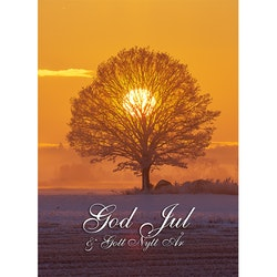 Julkort - Sol i trädkrona