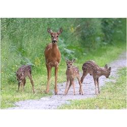 Rådjursfamilj