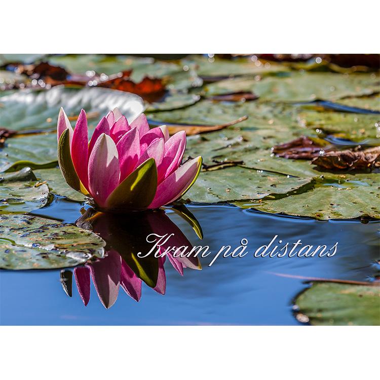 Vykort med text  - Kram på distans. Foto: Per Johansson. Kortbutiken säljer detta vykort.