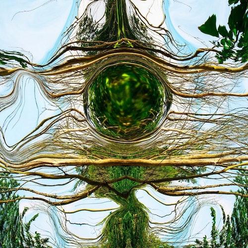 Skogen 1