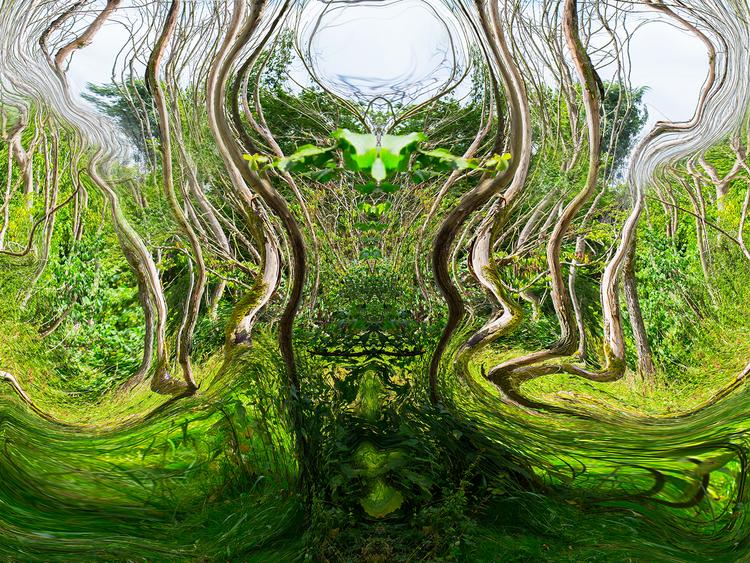 Skogen 3