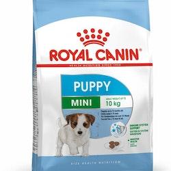 Mini puppy 4 kg