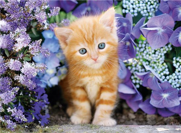 Clementoni High Quality Collection Square - Ginger Cat (500 bitar)