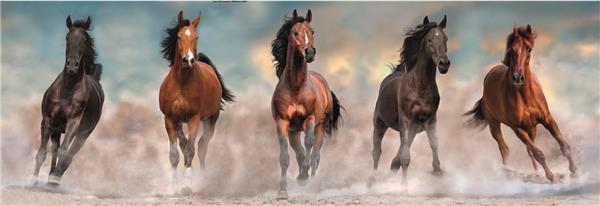 Clementoni High Quality Collection - Panorama Horses (1000 bitar)
