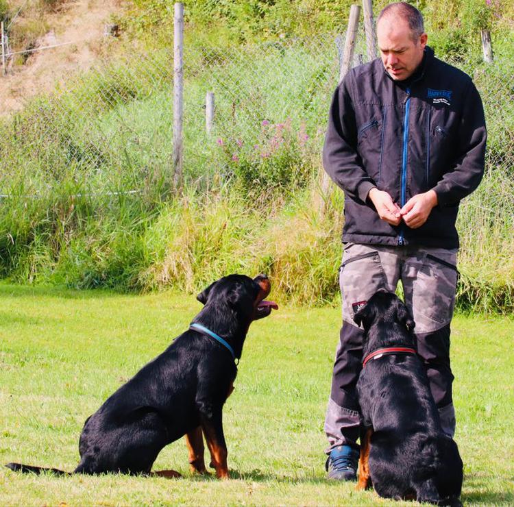 HAPPY DOG/ GAPPAY TRENINGSVEST 6 størrelser fra 850,-