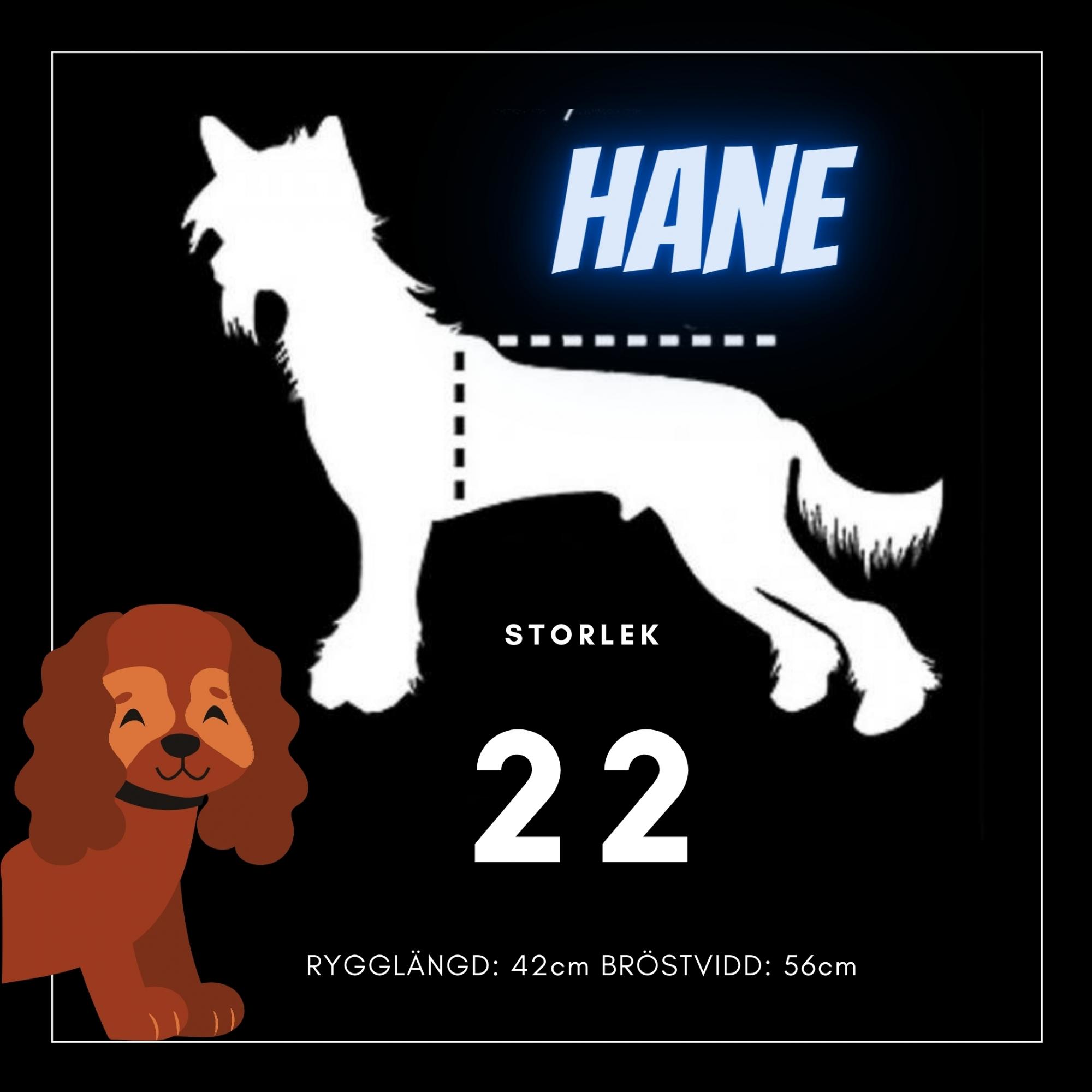 Hane Storlek 22 - Passion For Pet Fashion