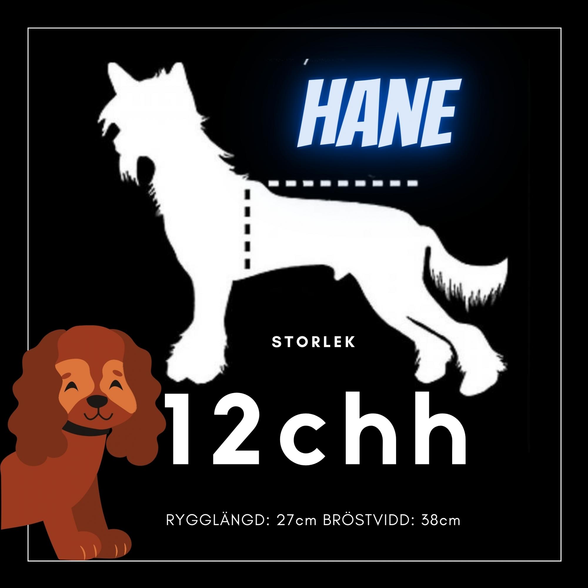 Hane Storlek 12chh - Passion For Pet Fashion