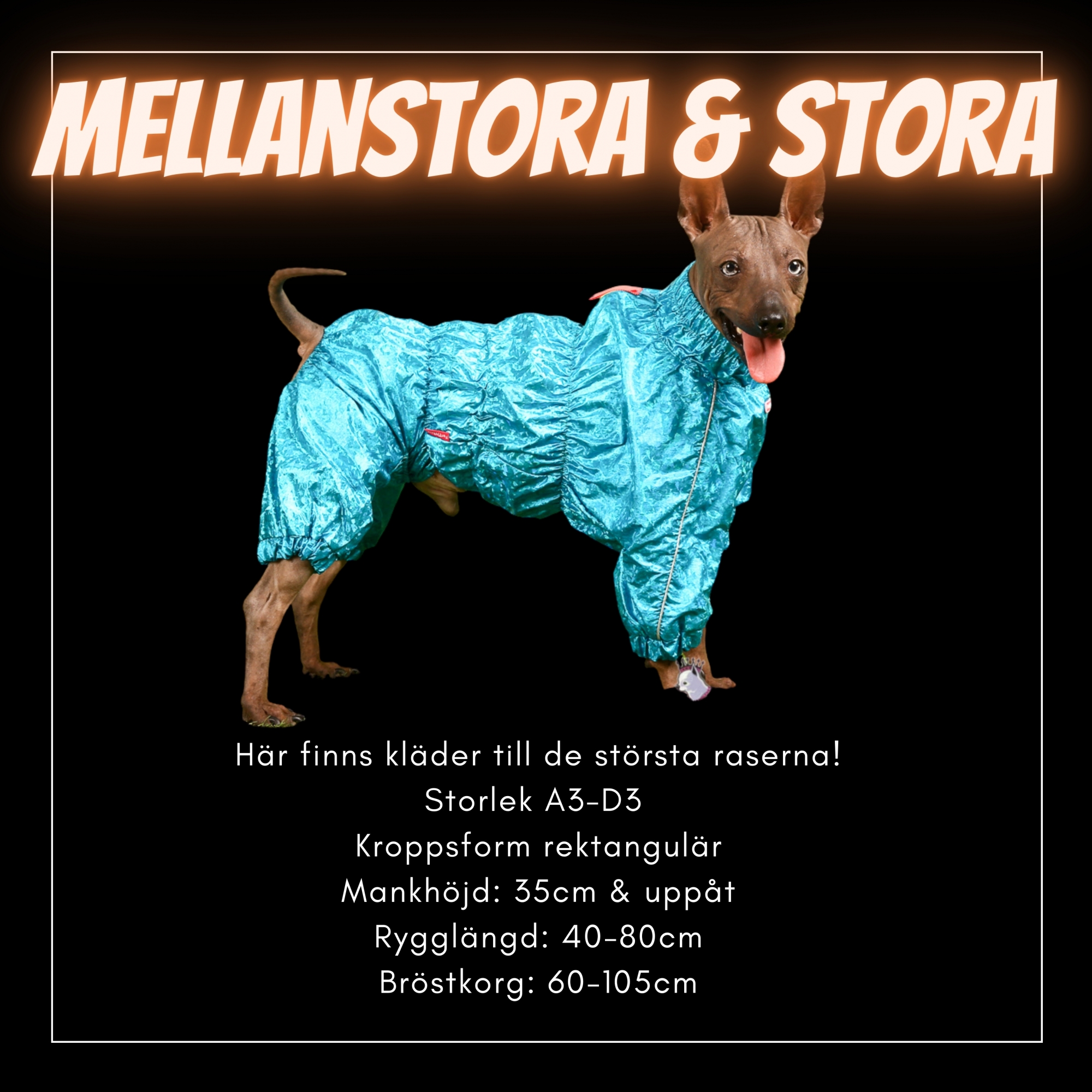 För mellanstora till stora hundar - Passion For Pet Fashion