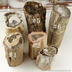 Förstenat trä, naturliga stockar