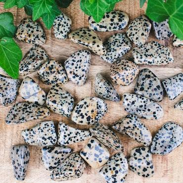 Dalmatinerjaspis
