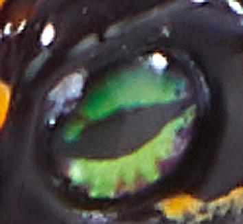 CloneFrog Black Toxic