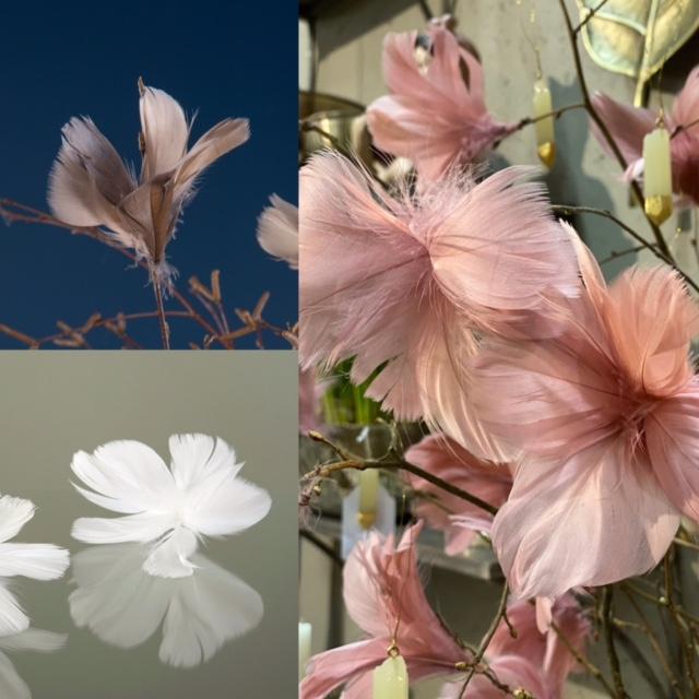 Blomfjädrar mullvad