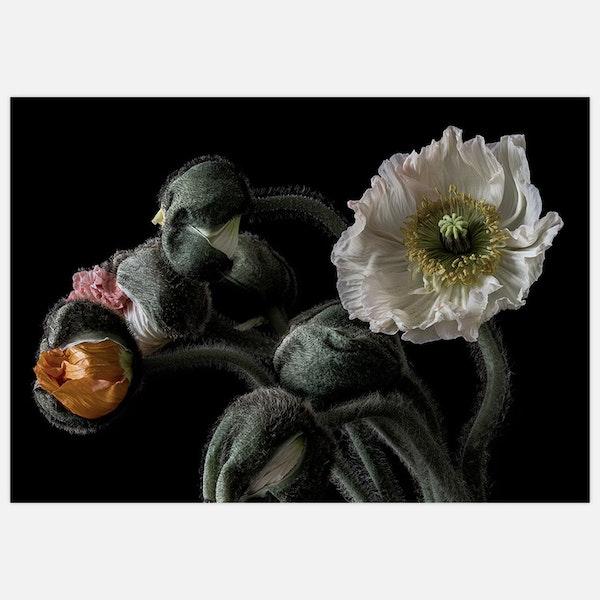 Poppy Bouquet 2