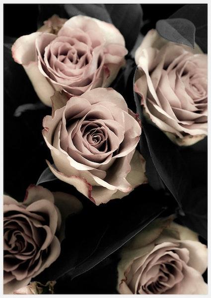 Classic Roses 2