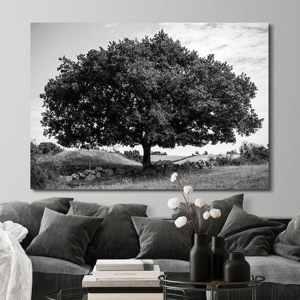 Amazing Tree Canvas