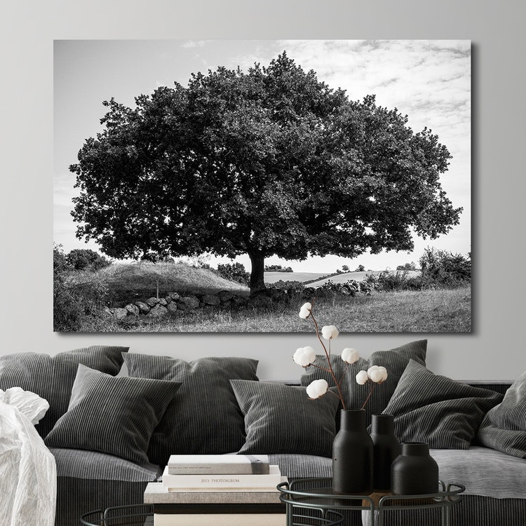 Amazing Tree Canvas