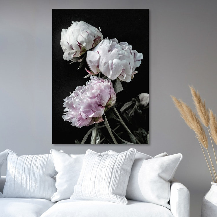 Peonies Canvas