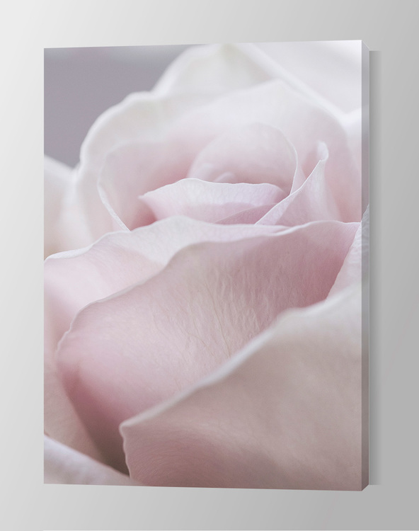 Gorgeous Rose Canvas