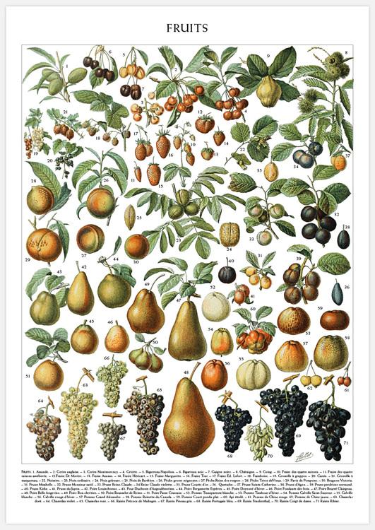 Tavelvägg Fruits & Vegetables
