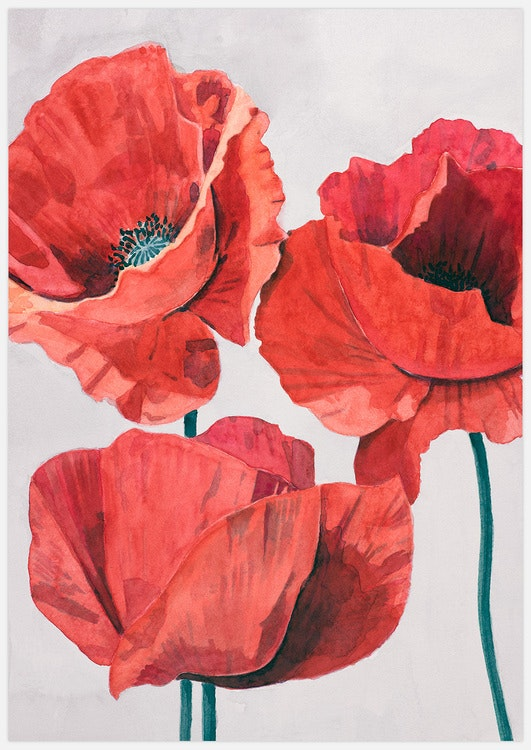 Painted Poppy 2