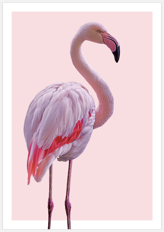 Tavelvägg Pink Flamingos