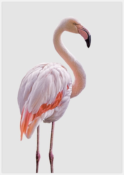 Light Pink Flamingo