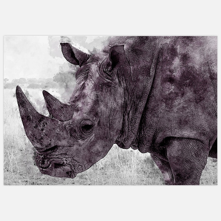Painted Rhinoceros