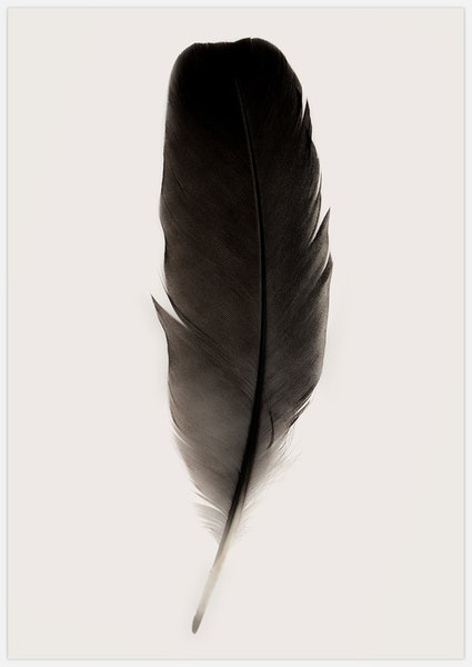 Black Feather 2