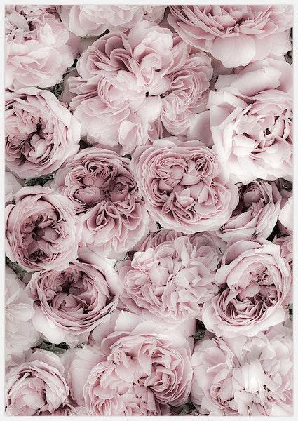 Pink Rose Bed