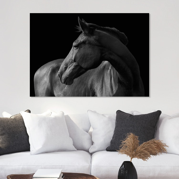 Horse black & white on Canvas