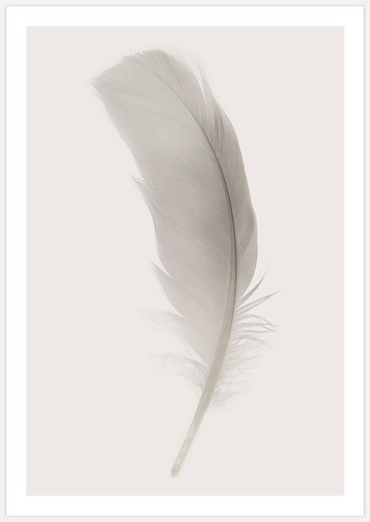 Tavelvägg Feathers