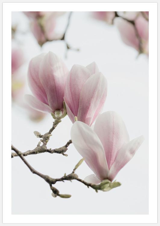 Tavelvägg Magnolia Love