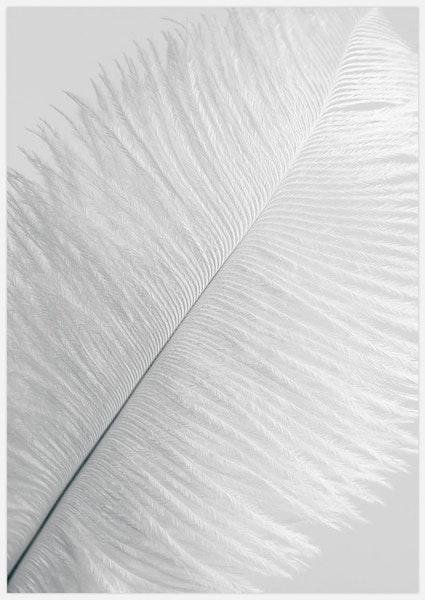 White Feather 1