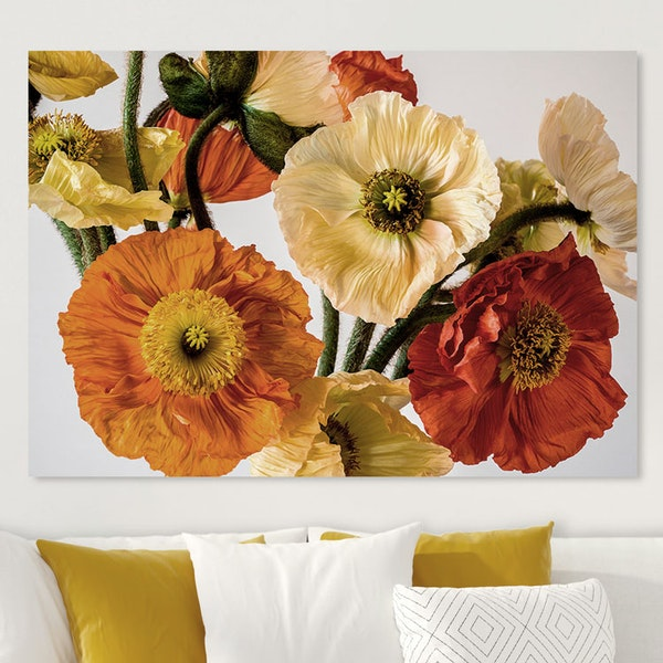 Colourful Poppies Canvas