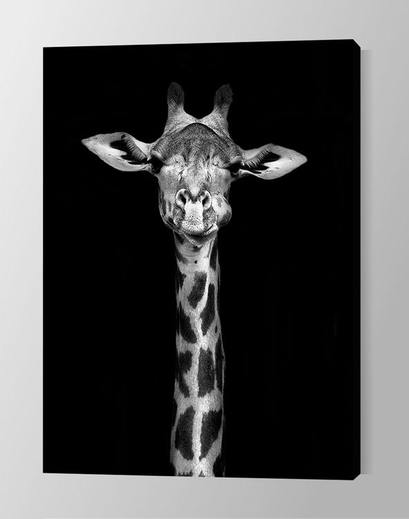 Giraff on Canvas