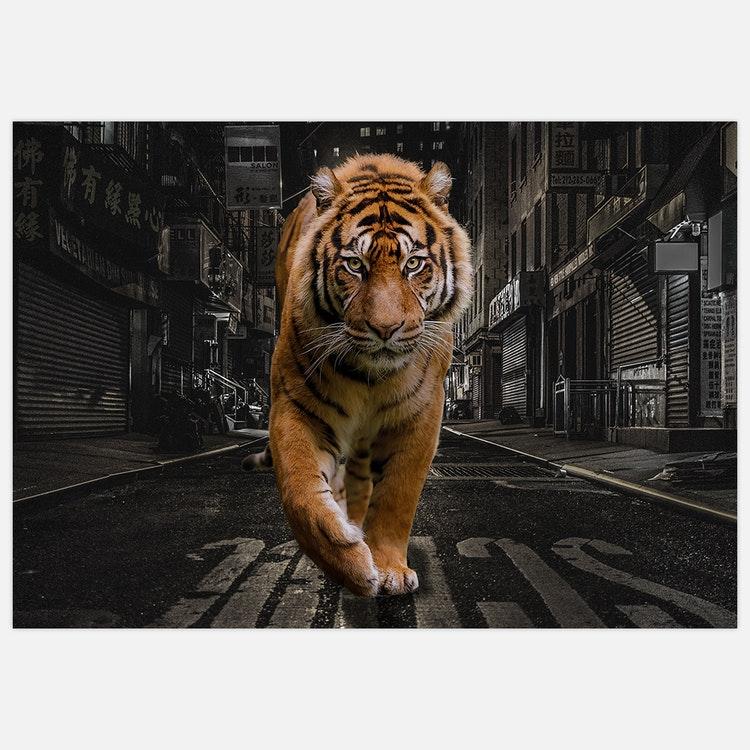 City Tiger