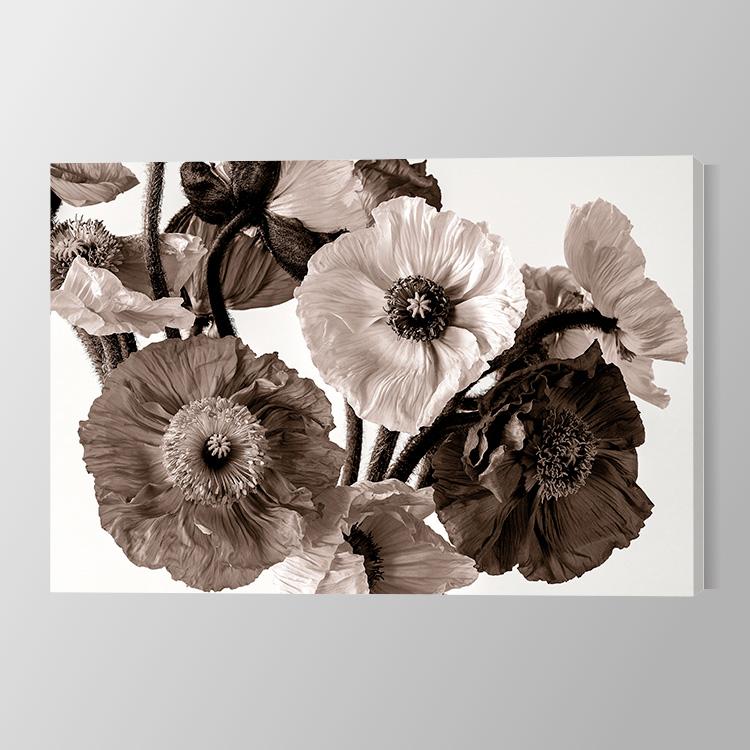 Poppy in sepia Canvas